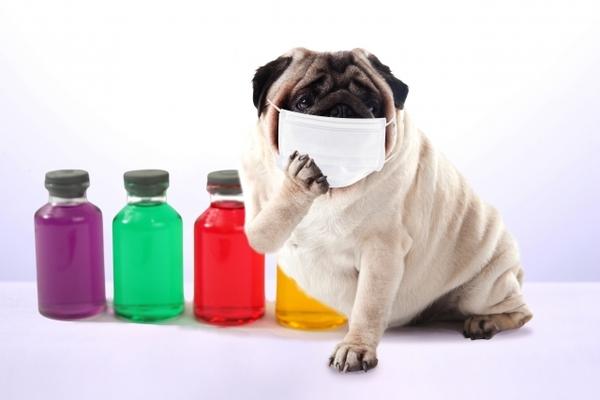 インフルエンザは全てを押し流します・・・サムネイル