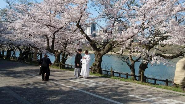 満開の桜の前で前撮り♪サムネイル